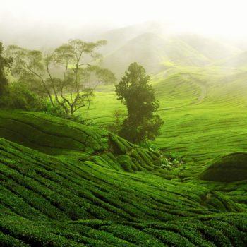 Yogi Tea - partner van ingspire, het inspiratie werkboek gouden inzichten acceptatie