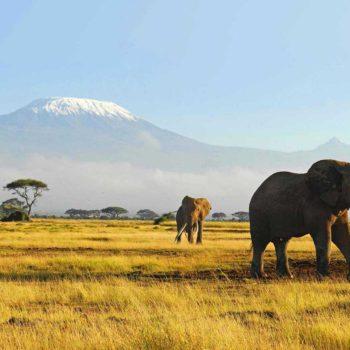 Ontdek meer over het spirituele krachtdier de olifant en bestel de olifant ketting voor kracht op inspirerendwinkelen.nl