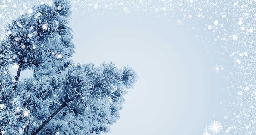 Bijzondere kerstbomen