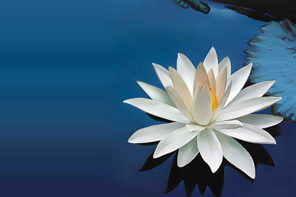 De betekenissen van de lotusbloem als symbool cadeau tips